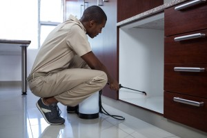 Pest Inspection, Pest Control in Bayswater, W2. Call Now 020 8166 9746